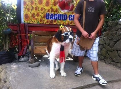バギオ犬.jpg